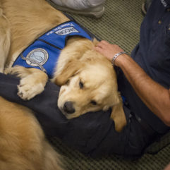 Comfort Dogs Deliver Smiles to Orange County During Time of Healing