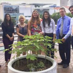 Orange County Employees Plant Sustainable Garden