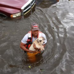 Emergency management employee with a rescued dog