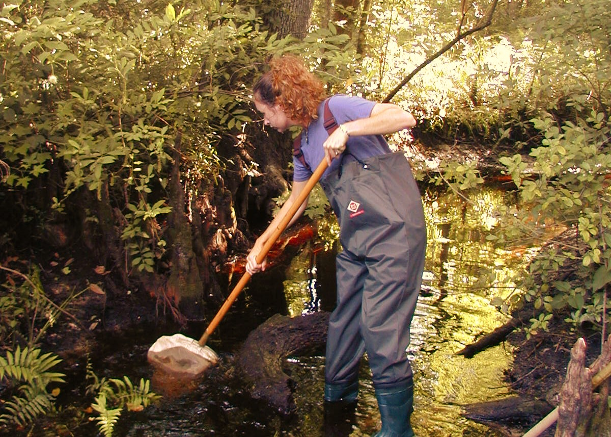 Woman with a net collecting samples from a creek
