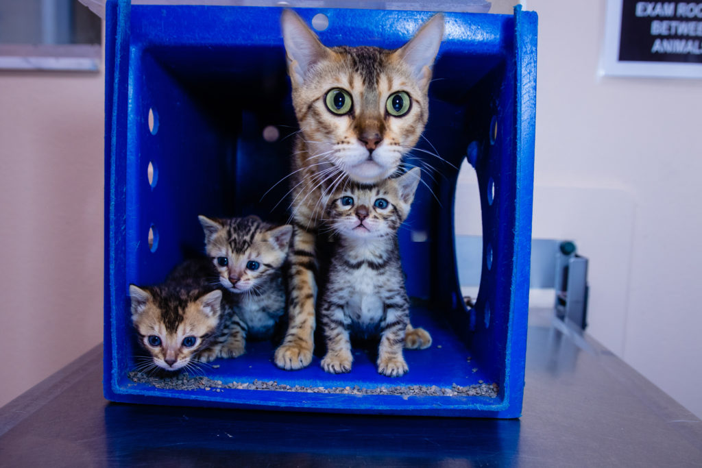 Three kittens with their mother