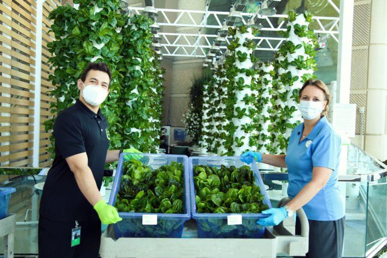 Volunteers holding fresh produce from indoor garden