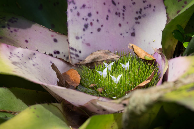 Una flor en Nerhling Gardens
