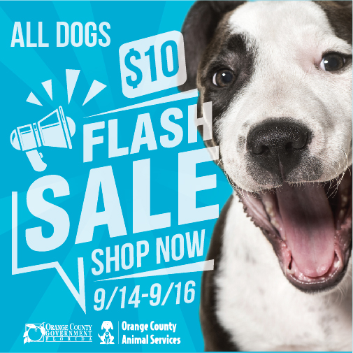 All Dogs - $10 Flash Sale - Shop Now - September 14 to September 16 - Orange County Animal Services