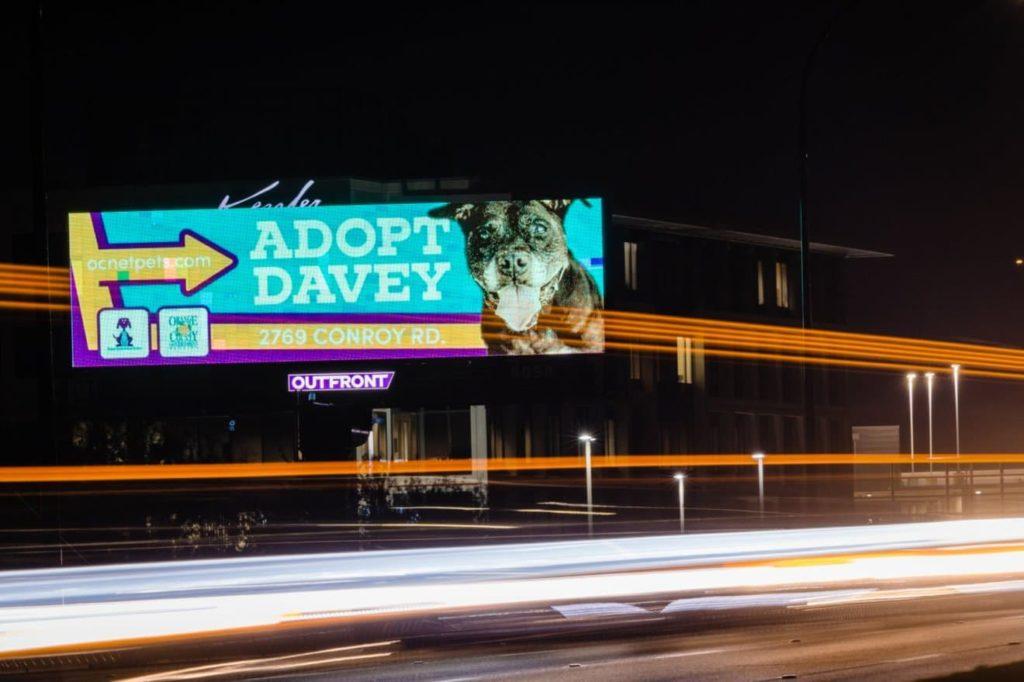 Adopt Davey